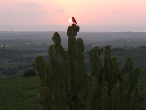 Sonneuntergang - Finca LaMuela