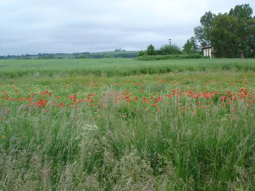 Naturschutzgebiet Riedensee