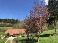 Langmichelhof, Ferienwohnung 32qm, 1 Wohn--Schlafraum in Waldkirch - kleines Detailbild