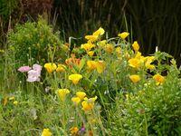Haus Möller - Appartements, Appartement Nr.3 in Sylt-Tinnum - kleines Detailbild