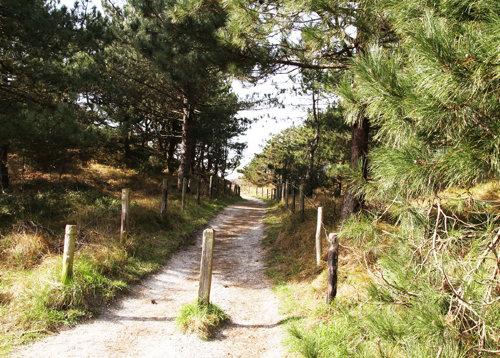 Den Weg zum Strand durch Wald und Dünen