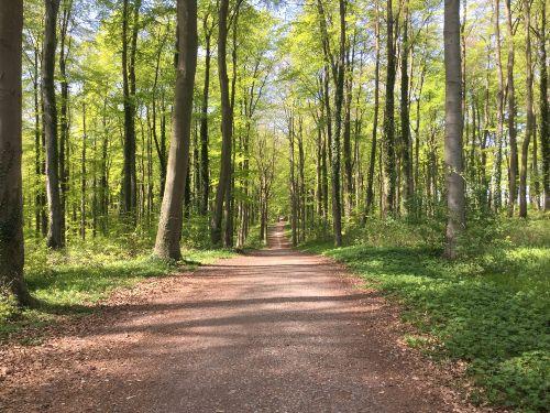 Kilometerlange Waldwege
