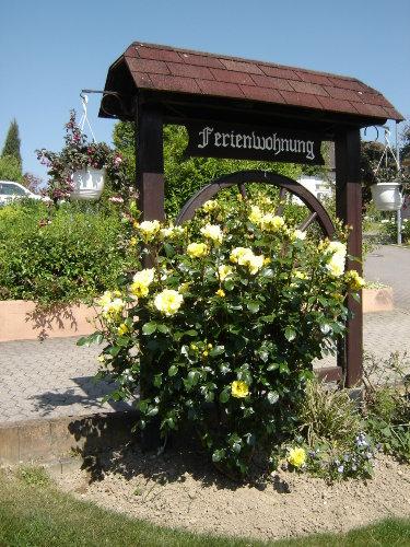 Herzlich Willkommen, die Rosen begr��en