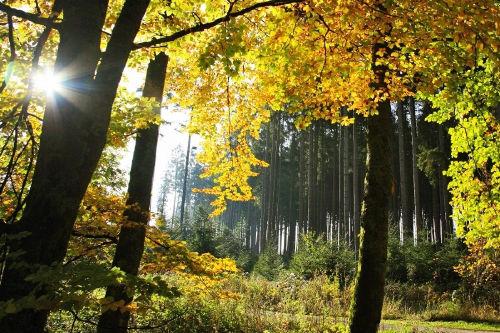 Waldimpression vom Thüringer Wald