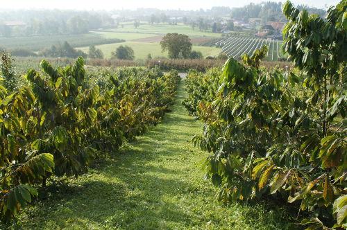 saftiges Grün-unsere eigenen Plantagen