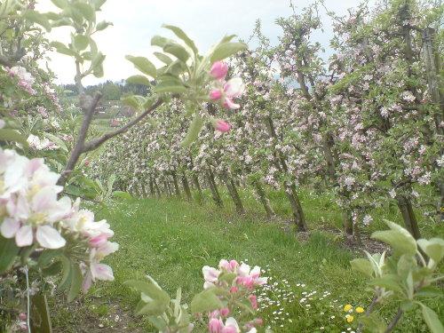 SONNENHALDE im Frühling