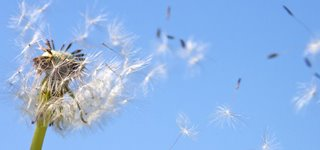 unbelastete Umgebung für Allergiker