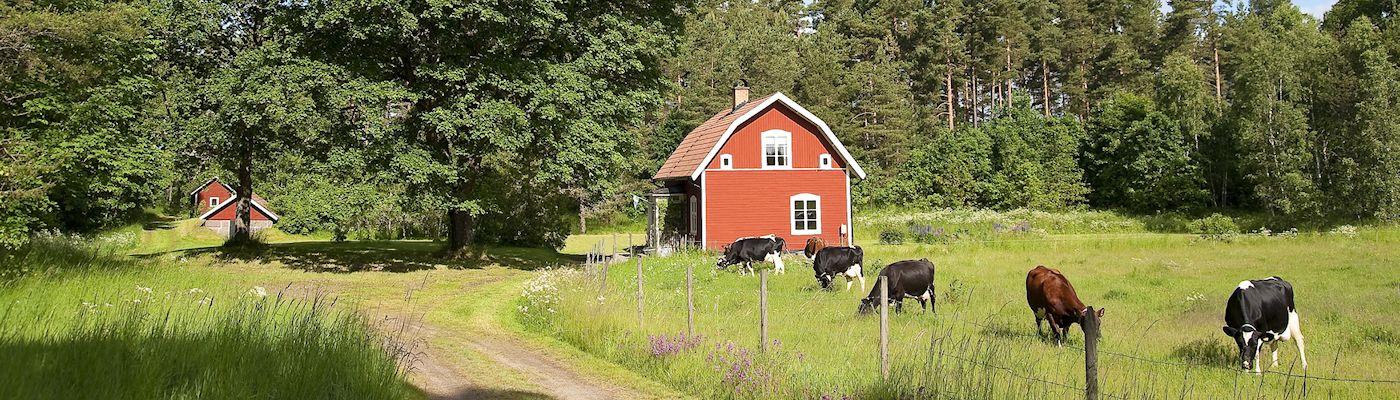 goetaland schweden ferienhaeuser buchen
