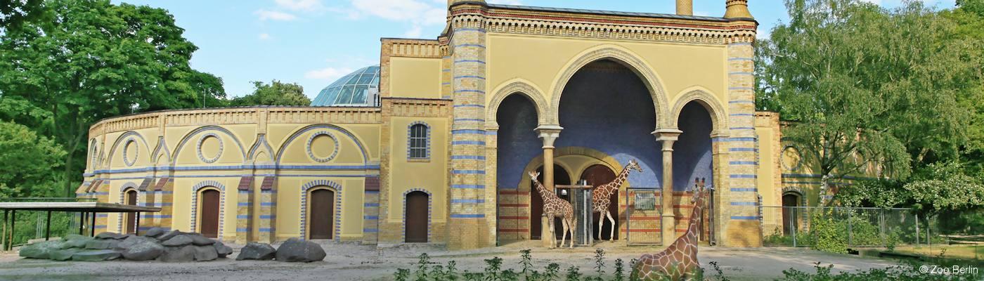 zoologischer garten berlin giraffen