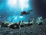 ozeaneum stralsund taucher