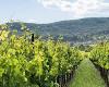 Urlaubsidee Wein-Urlaub