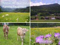 Ferienbauernhof Feuerstein, Ferienwohnung - Alpenglühen (2-6 Pers.) in Bezau - kleines Detailbild