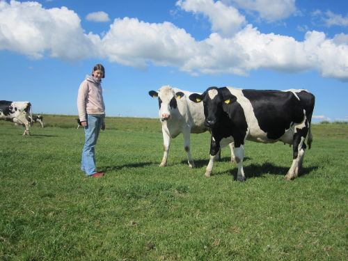 Diane mit einigen unserer Milchkühe