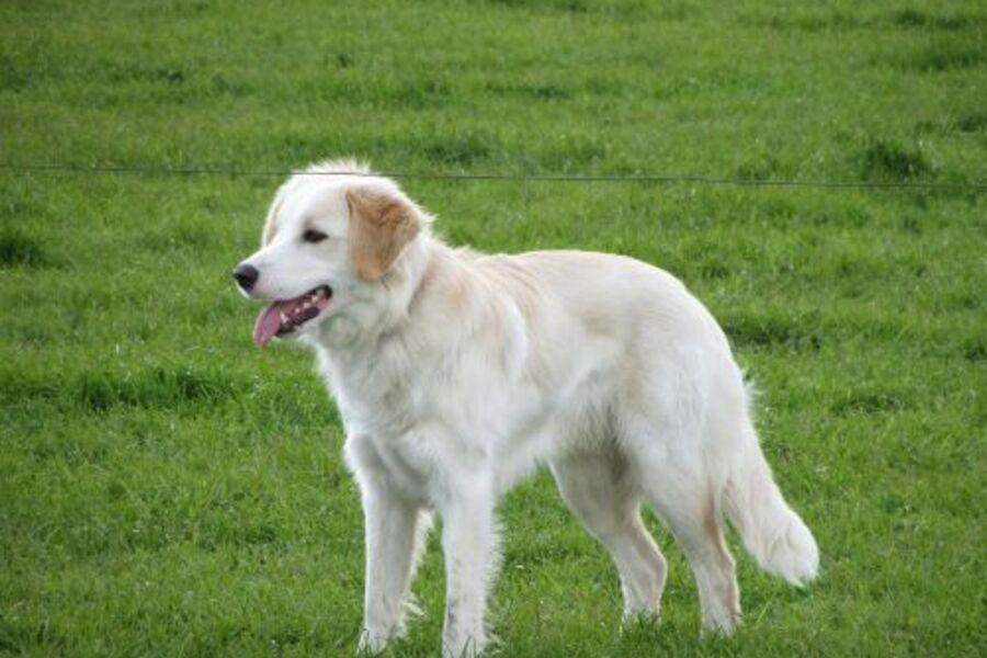 Tamme, unser Hofhund
