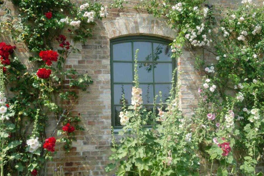 Rosenranken am Fenster