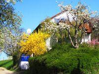 Ferienhaus Honigschlecker in Meersburg - kleines Detailbild