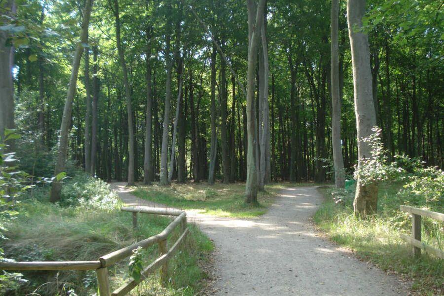 Küstenwald - Ferienwohnung Nordwind