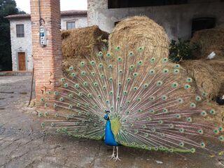 Bauernhof Bigongiari - Ferienwohnung Leda in Lucca - Italien - kleines Detailbild
