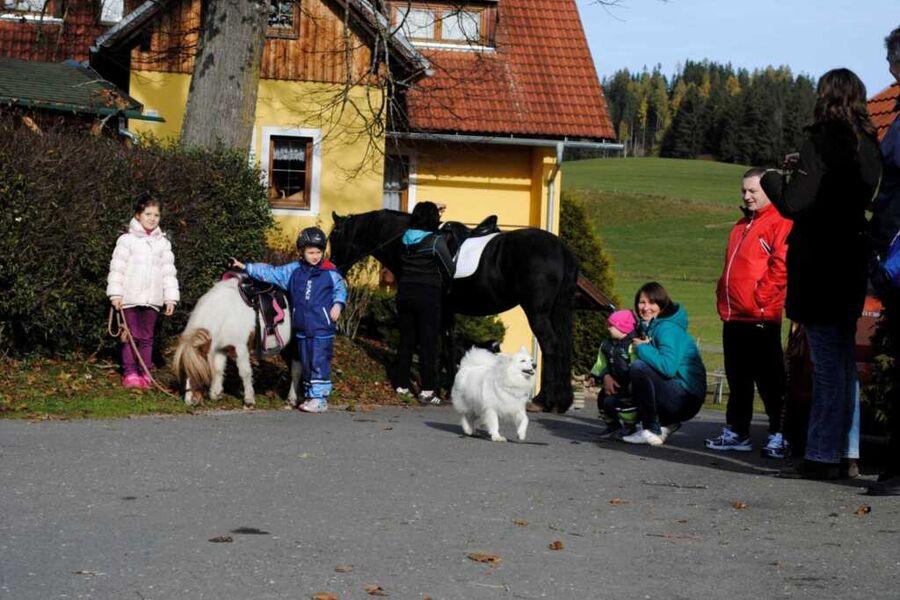 Gasthof- Gästehaus Seeblick vlg. Kuchlbauer, Natur