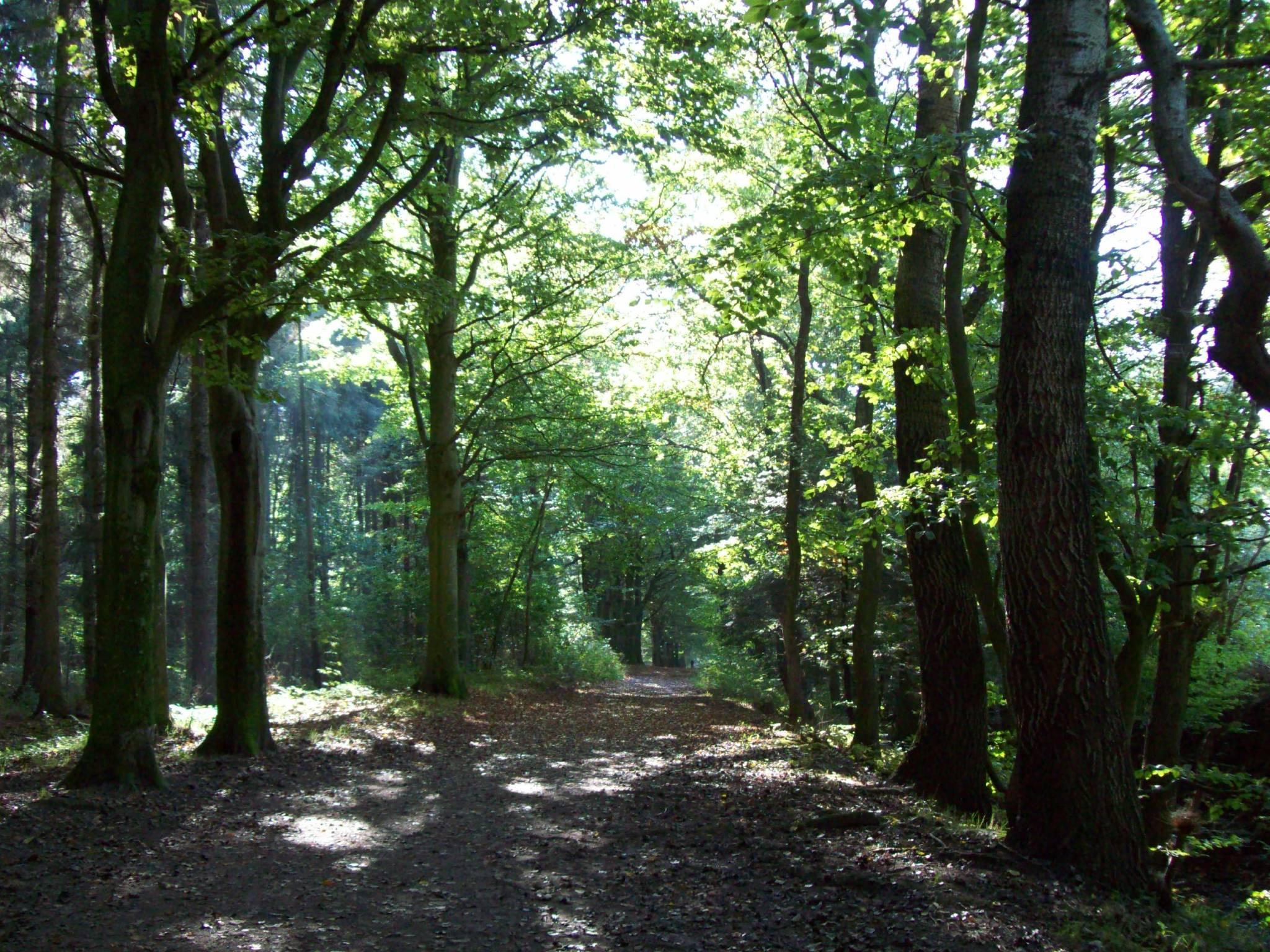 Fürstenwald