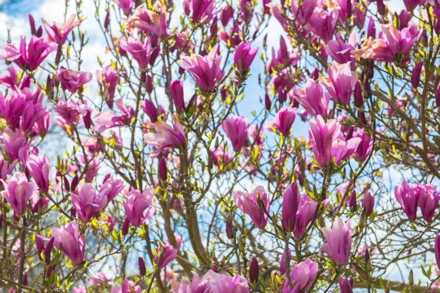 Apartment-Haus Gundelfinger, Ansicht Rückgebäude