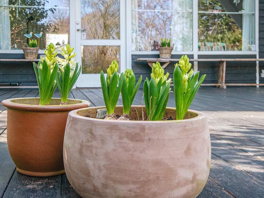 Ferienhaus in Hejls, Haus Nr. 62550 - Umgebungsbild