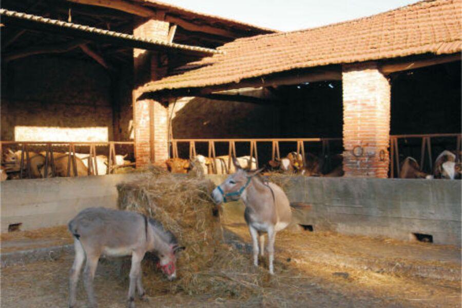 Unsere Eselinnen