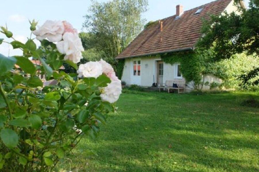 Rosenblick auf Haus und Apfelbaum