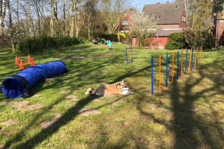 Hundespielplatz im eigenen Garten