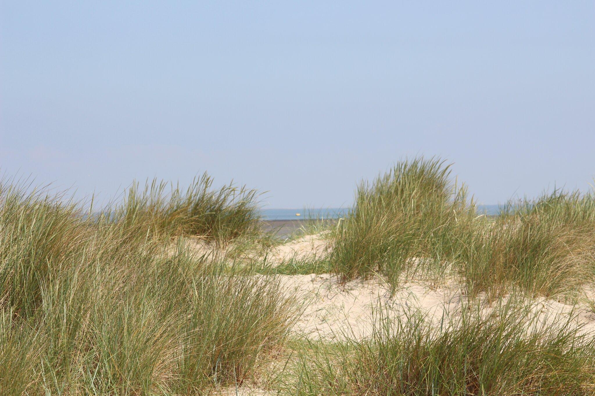 Dünen am Strand von Schillig