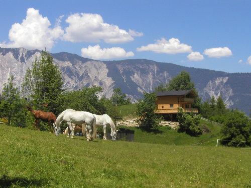 Pferde auf der Koppel - Haus Anna im H.