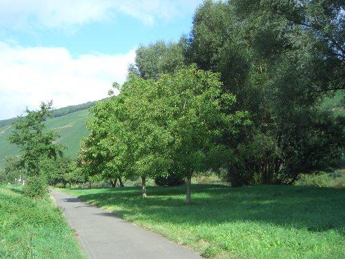 Radweg an der Mosel bei Köwerich