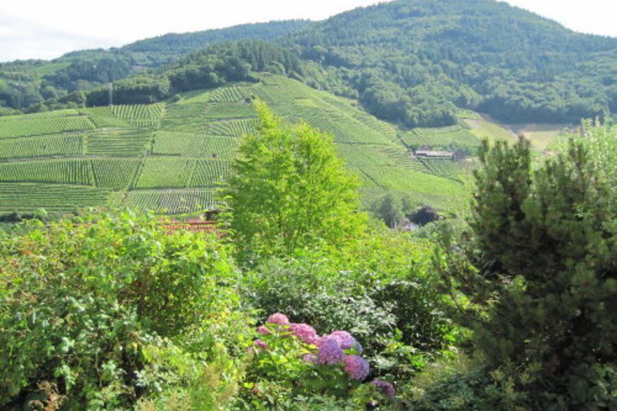 Blick auf die Weinberge und Wälder