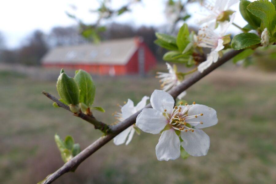 pergo im Frühling