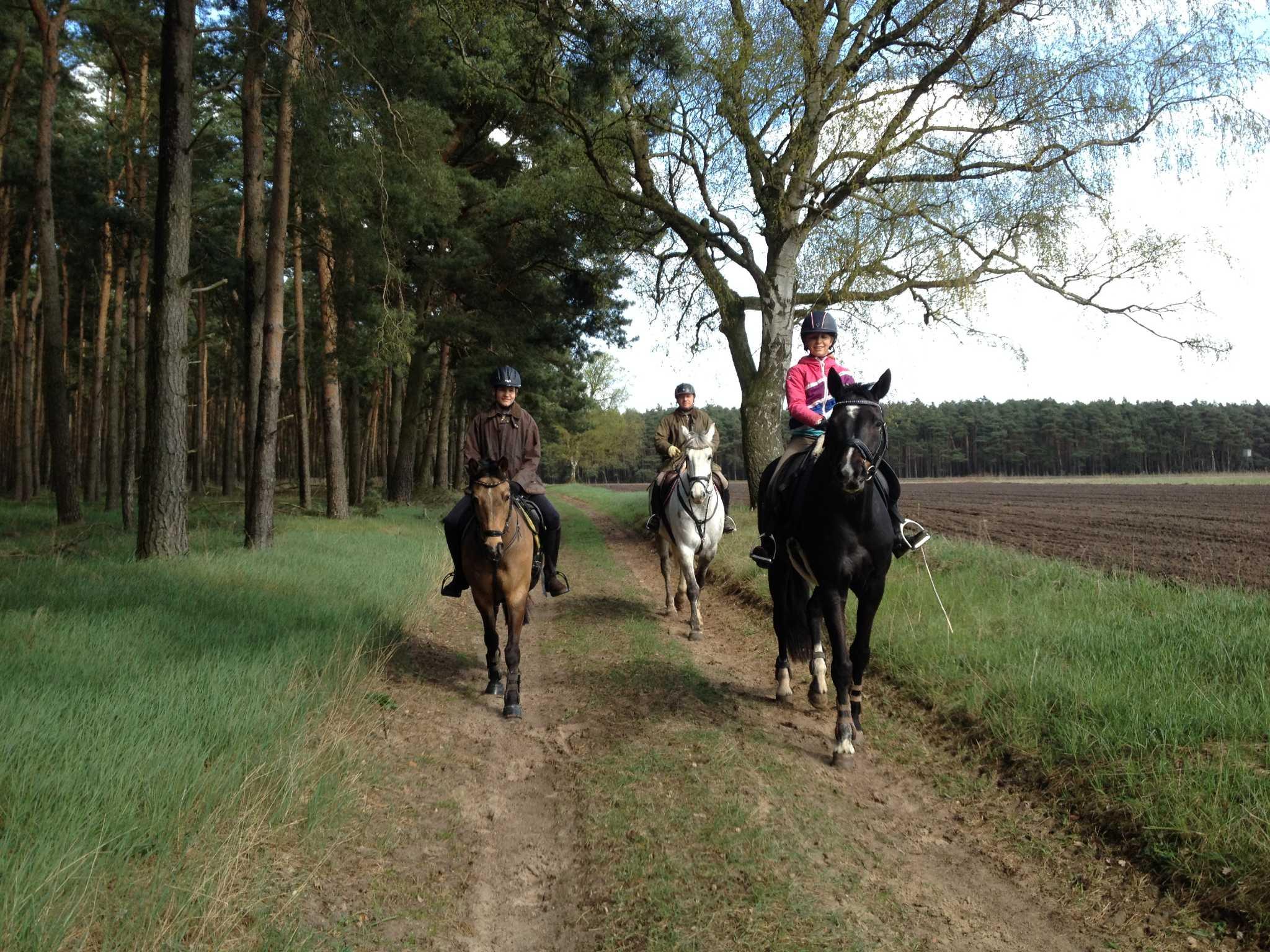 Gäste können Ihre Pferde mitbringen