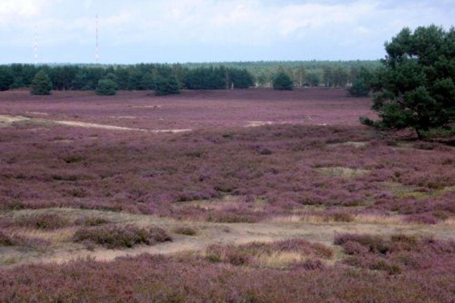 In der nahegelegenen Nemitzer Heide