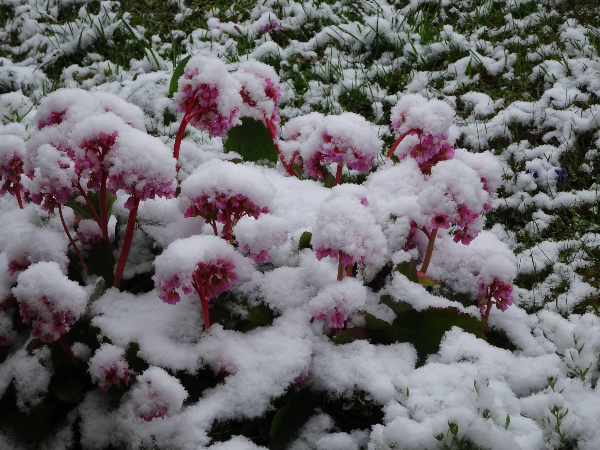 Schnee im Frühling