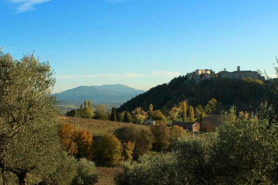 Montone, von Olivenhainen umgeben