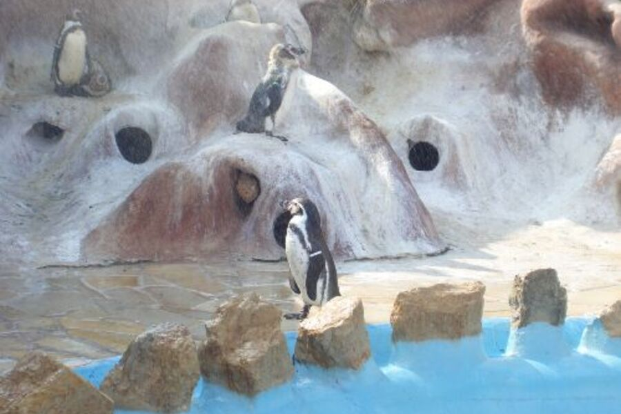 Ausflug zu den Pinguinen im Marineland