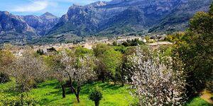 Finca - Ferienwohnung 1 Buena Vista in Soller - kleines Detailbild