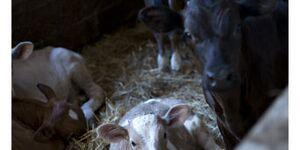 Bauernhof Bigongiari - Ferienwohnung Lina in Lucca - kleines Detailbild