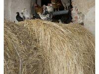 Bauernhof Bigongiari - Ferienwohnung Eugenio in Lucca - kleines Detailbild