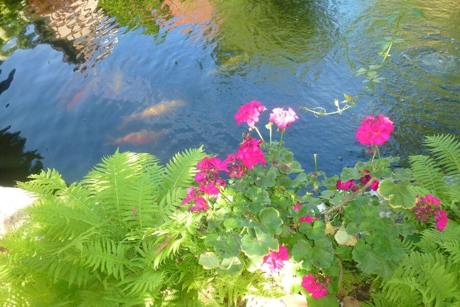 Garten/Herbst