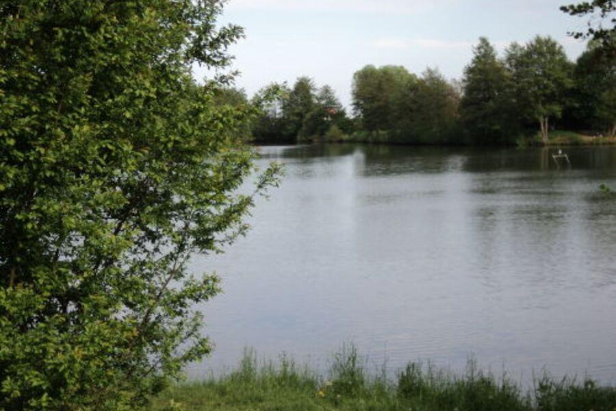 Mandelblüte in Kirrweiler