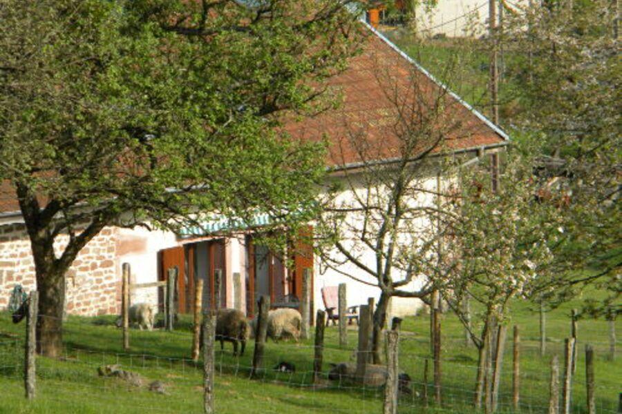 Vogesen Ferienhaus für Naturliebhaber
