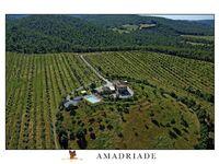 Amadriade Agritourism - Ferienwohnung Sambuco in Petroio - kleines Detailbild