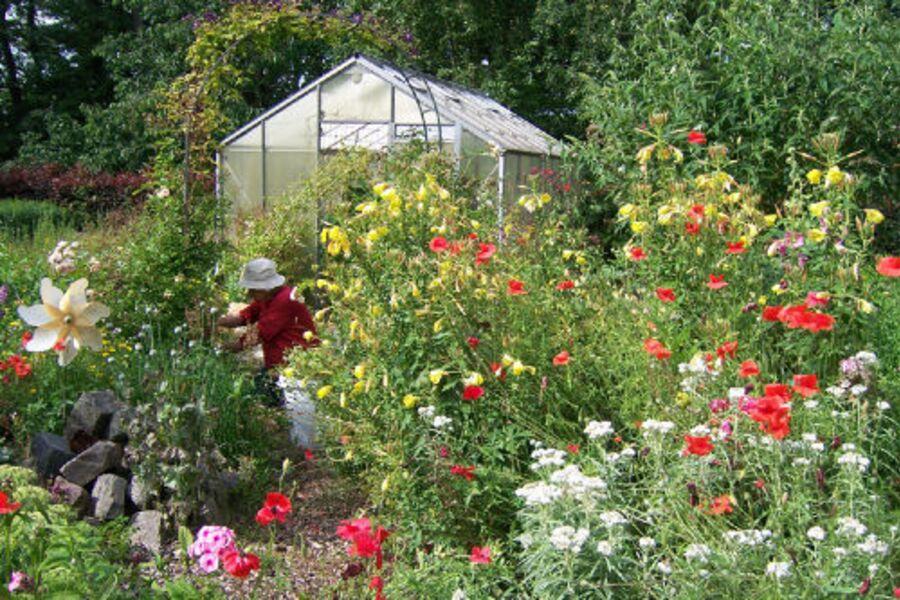 Bauerngarten in der Blüte
