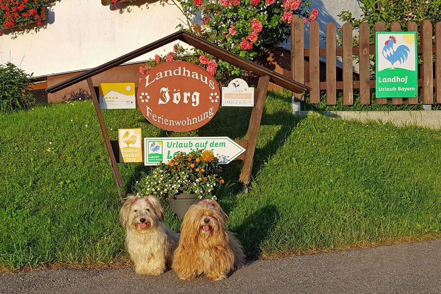 Ferienwohnung mit Hund im Allgäu