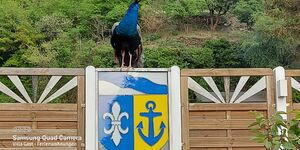 Villa Gast - Salmagundi Plus in Kamp-Bornhofen - kleines Detailbild