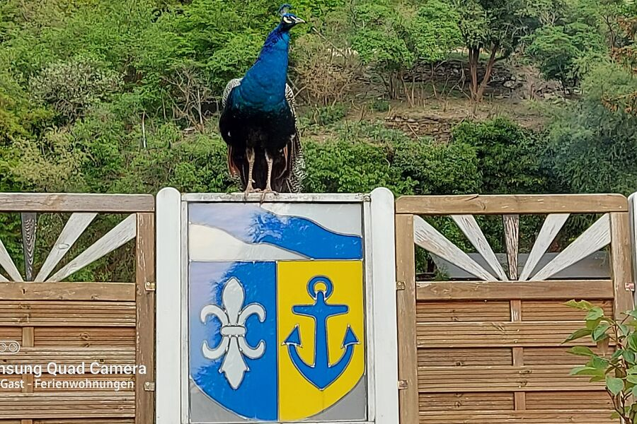 Blick aus der Weinlaube ins Rheintal